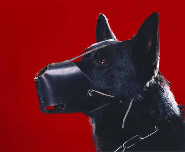 """A Dog with a Muzzle on Red Background"", 2004, 80x100 cm, c-print on aluminium, ed. 6"