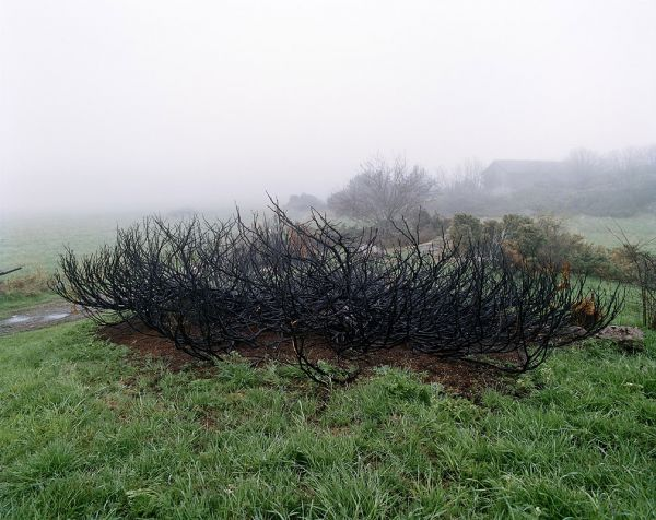 Burned Bush, 2002, 125 x 155 cm, c-print on aluminium, ed.6