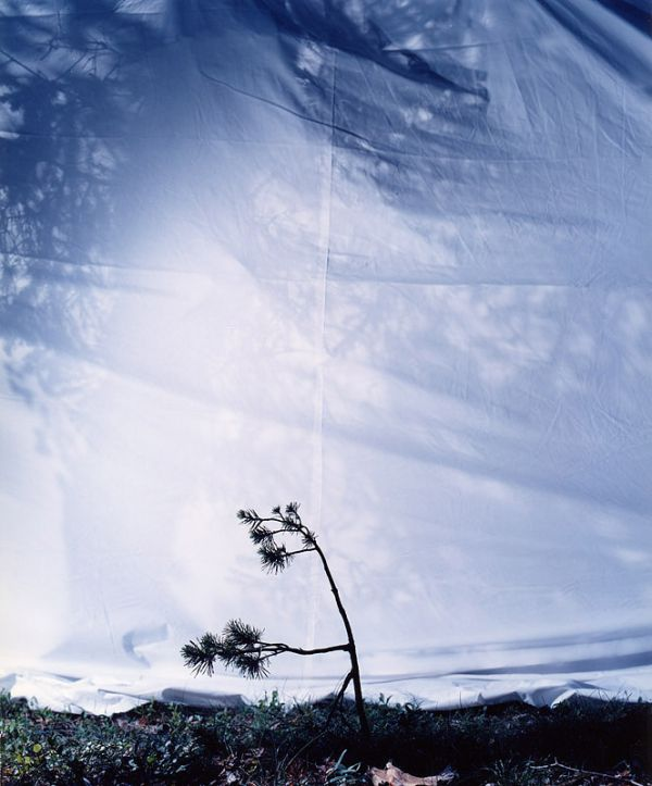 Tree I-IV, 2003, 50 x 40 cm, c-print on aluminium, ed. 6